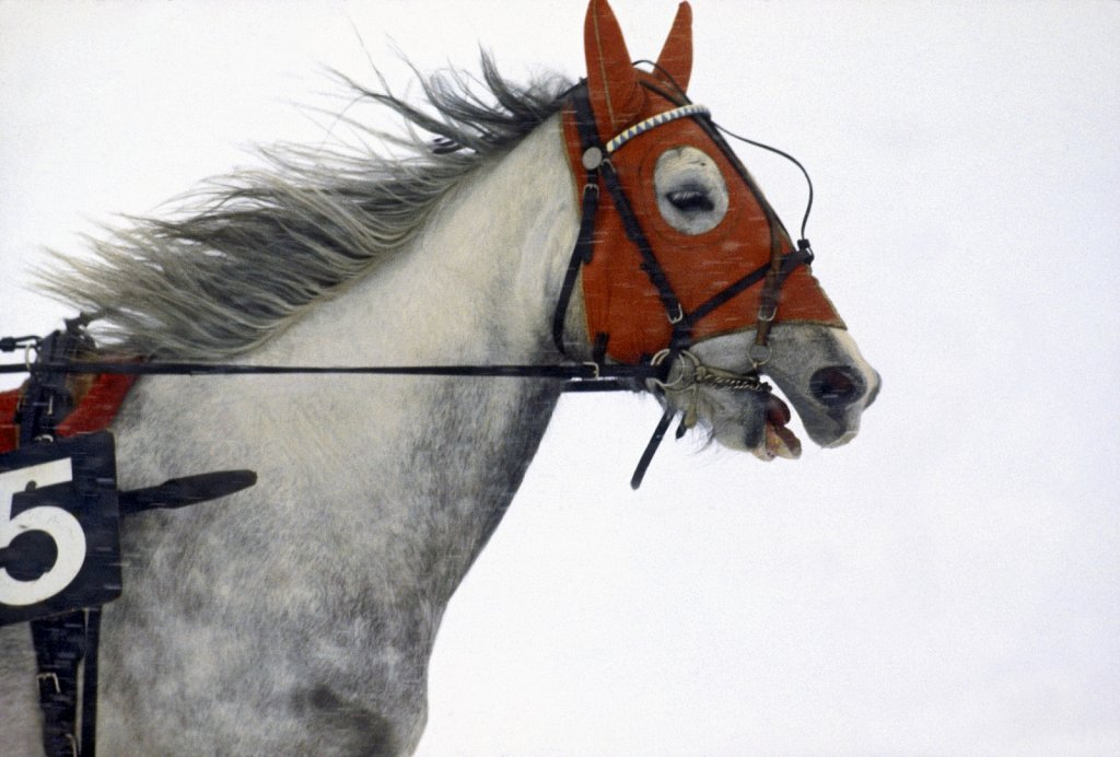 Sports-Horses and Places