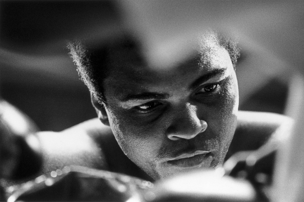 Great Boxer